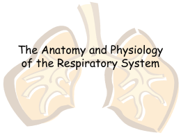 The Anatomy and Physiology of the Respiratory system