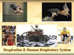 Respiration and Respiratory System