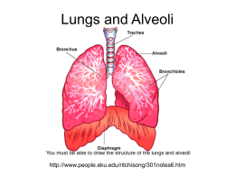 Lungs and Alveoli