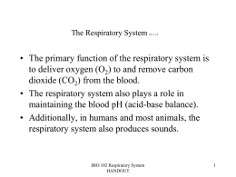 The Respiratory System Lab 10