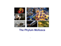 Classes of Molluscs - Solon City Schools