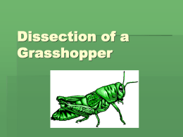 Why dissect a grasshopper?