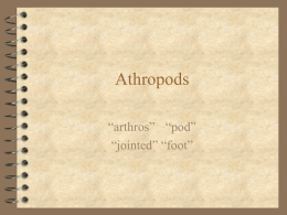 Dr. P`s Arthropods Notes