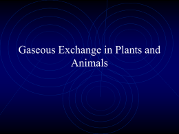 Gaseous Exchange in Plants and Animals