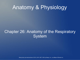 Ch. 26 Anatomy of the Respiratory System New Notes