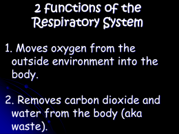 2 functions of the Respiratory System