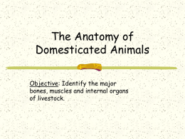 The Anatomy of Domesticated Animals