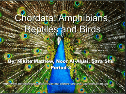 Chordata: Amphibians, Reptiles and Birds