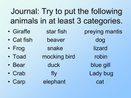 How Do We Classify Animals?