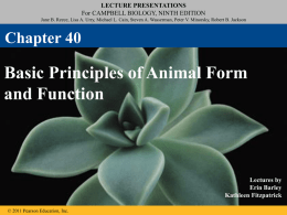 Chapter 40 - Basic Principles of Animal Form