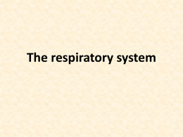 The respiratory system Respiration