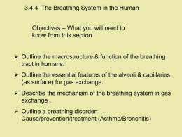 3.4.4 Lungs Breathing - Spanish Point Biology