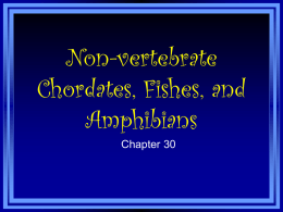 Vertebrates: Fishes to Reptiles