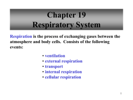 Respiratory System Notes - Reading Community Schools