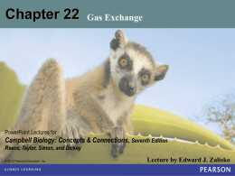 Chap 22 – Gas Exchange