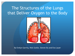 The Structures of the Lungs that Deliver Oxygen to the