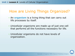 How are living things organized?