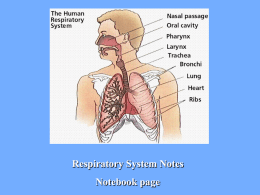 Respiratory_System_Notes