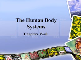 Ch. 35: The Nervous System