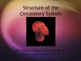 Structure of the Circulatory System