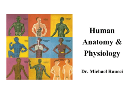 Anatomy & Physiology 2013