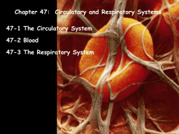 Chapter 47-Circulatory and Respiratory Systems