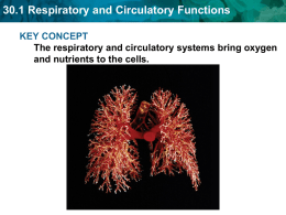 30.1 Respiratory and Circulatory Functions