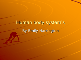 Human body system`s