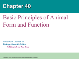 Principles of Animal Form & Function