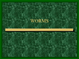 worms - Quia
