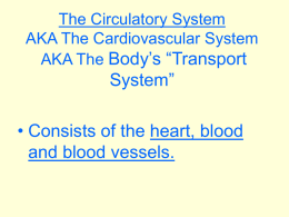 The Circulatory Systemppt