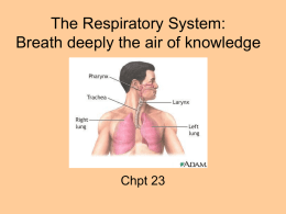 The Respiratory System - Brookwood High School