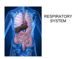 Respiratory System Slideshow - Mr. Money