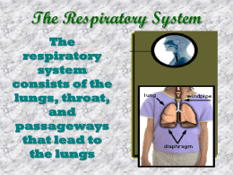 The Respiratory System - Junction Hill C