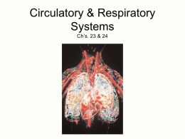 Ch. 23 & 24 Circulation and Respiration
