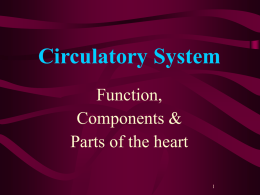 day 5 intro to circulation