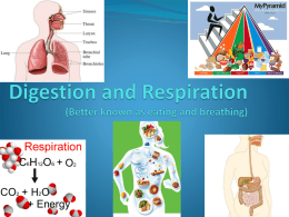 Digestion and Respiration