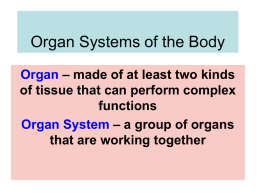 Chapter 3 Organ Systems of the Body