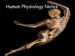 Human Physiology Notes
