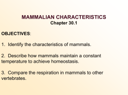 Other Characteristics Shared by Mammals