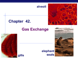 ch_42 gas exchange - Valhalla High School