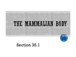 The Mammalian Body - Walker Elementary