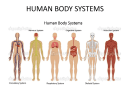 human body systems - Riverdale Middle School