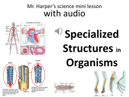 Specialized Structures in Organisms