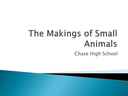 The Makings of Small Animals