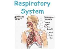 Respiratory System - Elmwood Park Memorial High School