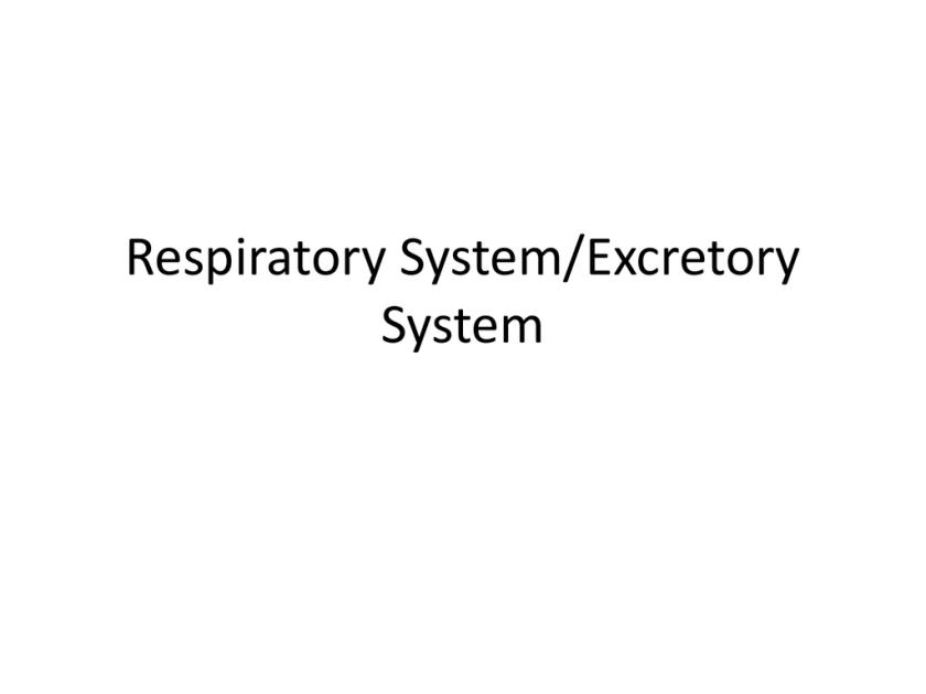 Respiratory Systemexcretory System Studyslide