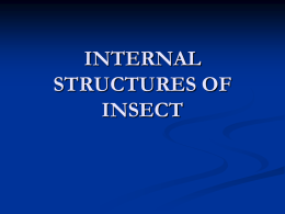 INTERNAL STRUCTURES OF INSECT