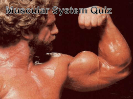 Muscular System Quizx
