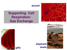 6 Cell Respiration and Gas Exchange